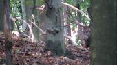 Ruja v lese.